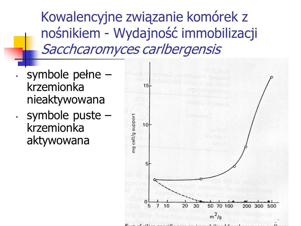Kowalencyjne związanie komórek z nośnikiem - Wydajność immobilizacji Sacchcaromyces carlbergensis