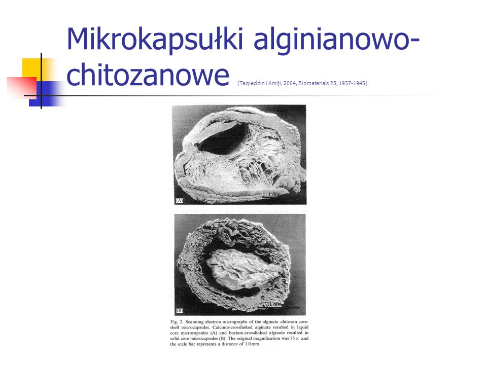 Mikrokapsułki alginianowo-chitozanowe (Taqieddin i Amiji, 2004, Biomaterials 25, 1937-1945)