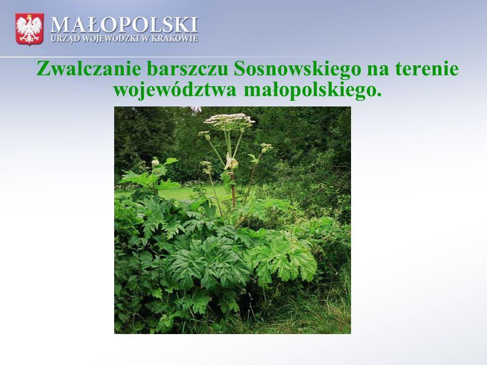 Zwalczanie barszczu Sosnowskiego na terenie województwa małopolskiego.