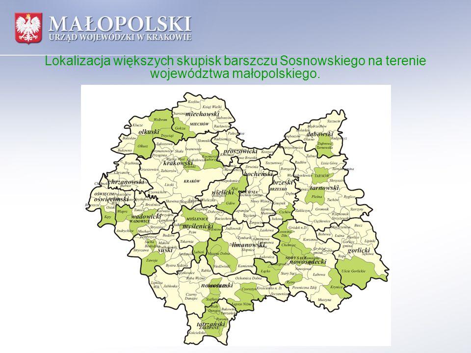 Lokalizacja większych skupisk barszczu Sosnowskiego na terenie województwa małopolskiego.