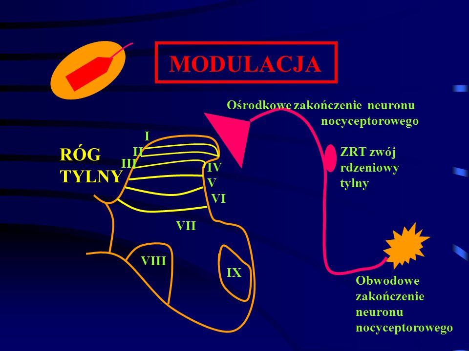 MODULACJA RÓG TYLNY Ośrodkowe zakończenie neuronu nocyceptorowego I II