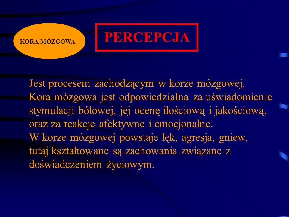 PERCEPCJA Jest procesem zachodzącym w korze mózgowej.