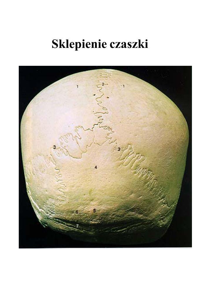 Sklepienie czaszki