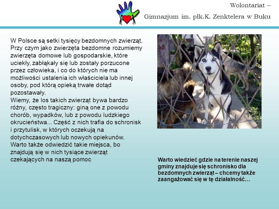 W Polsce są setki tysięcy bezdomnych zwierząt