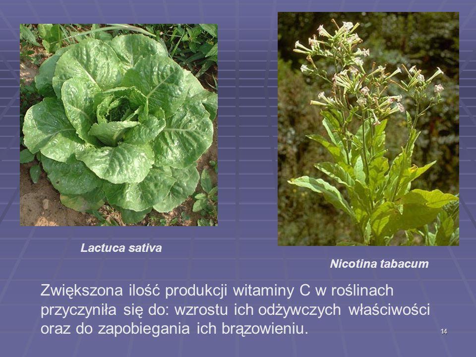 Lactuca sativa Nicotina tabacum.
