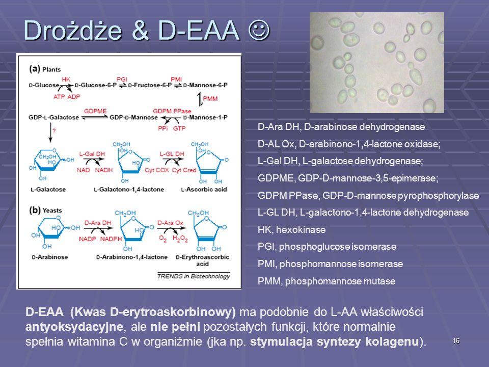 Drożdże & D-EAA D-Ara DH, D-arabinose dehydrogenase. D-AL Ox, D-arabinono-1,4-lactone oxidase; L-Gal DH, L-galactose dehydrogenase;