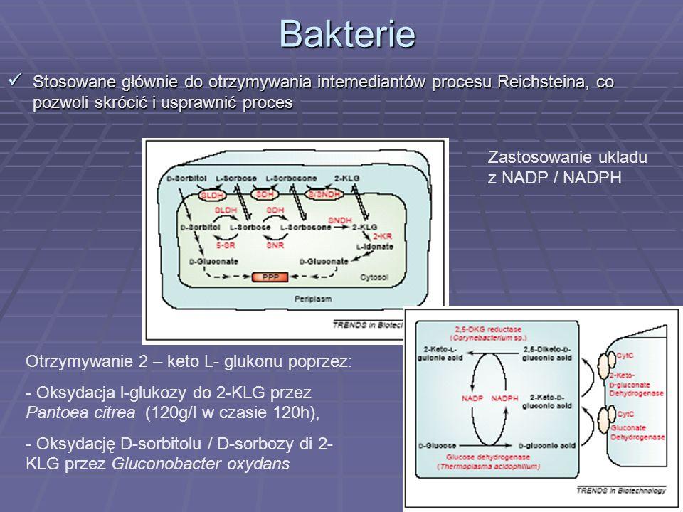 Bakterie Stosowane głównie do otrzymywania intemediantów procesu Reichsteina, co pozwoli skrócić i usprawnić proces.