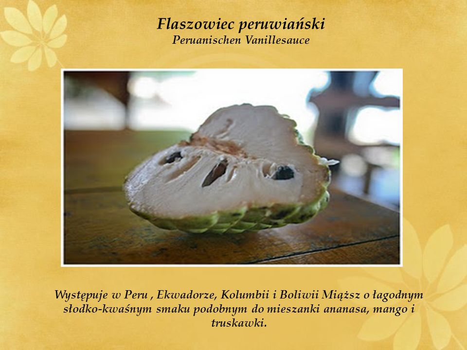 Flaszowiec peruwiański Peruanischen Vanillesauce