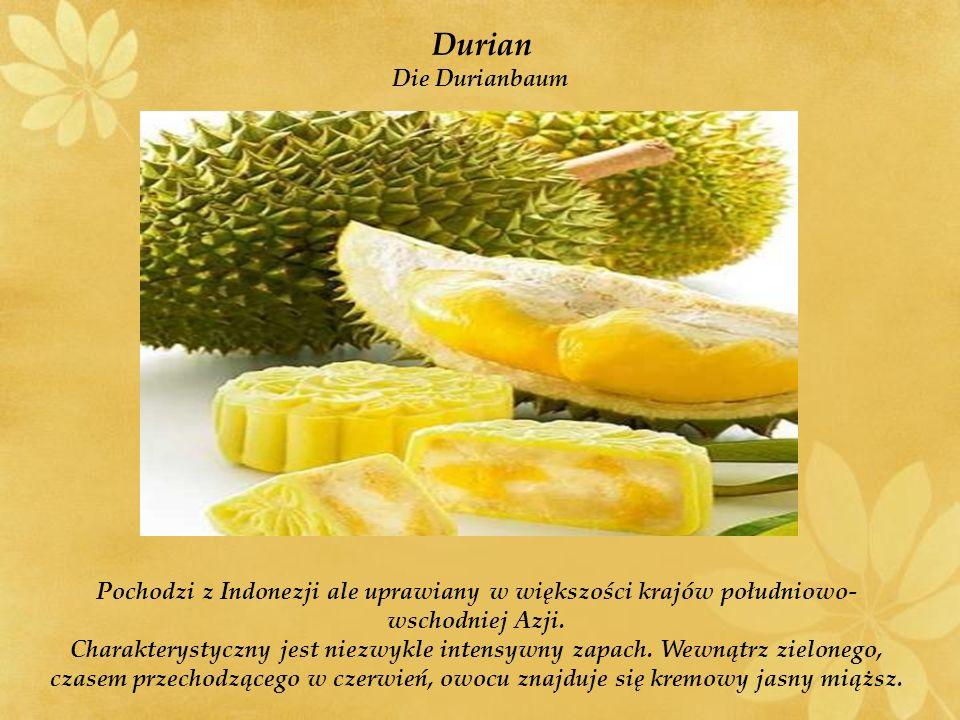 Durian Die Durianbaum. Pochodzi z Indonezji ale uprawiany w większości krajów południowo-wschodniej Azji.