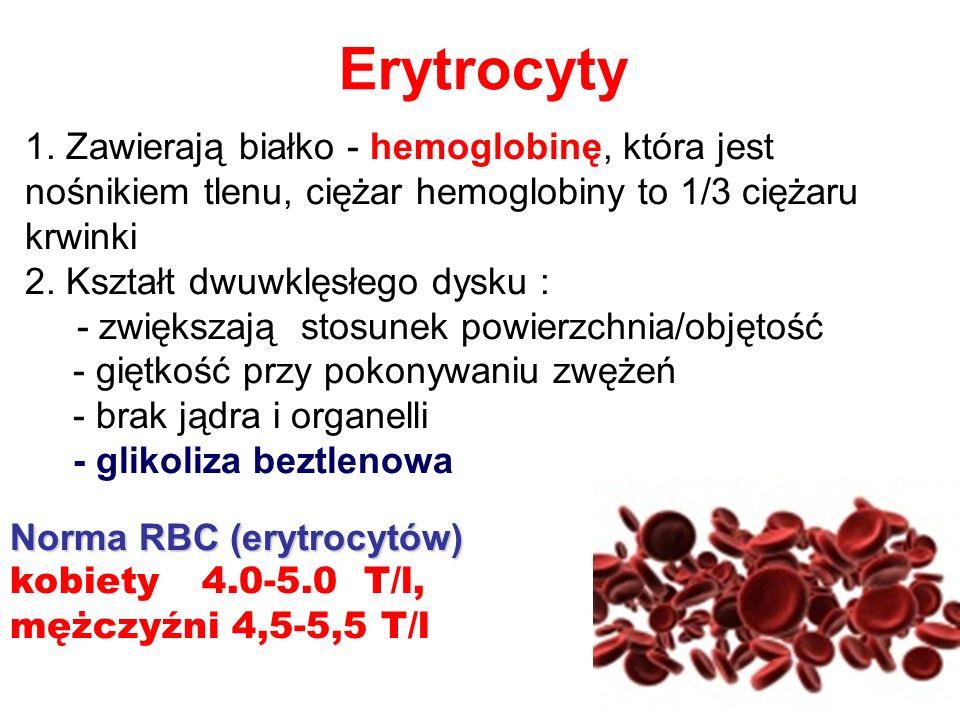Erytrocyty 1. Zawierają białko - hemoglobinę, która jest nośnikiem tlenu, ciężar hemoglobiny to 1/3 ciężaru krwinki.