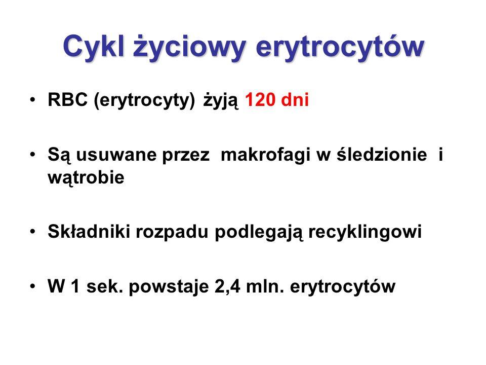 Cykl życiowy erytrocytów