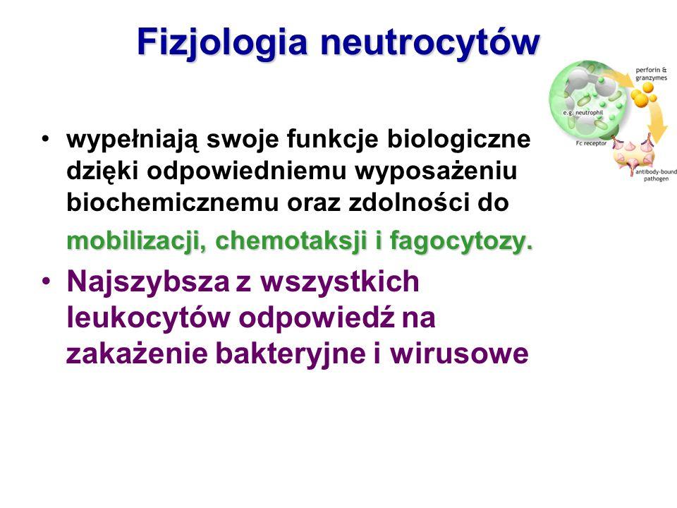 Fizjologia neutrocytów