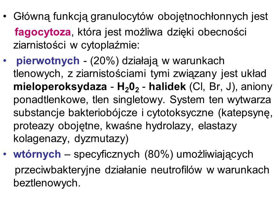 Główną funkcją granulocytów obojętnochłonnych jest