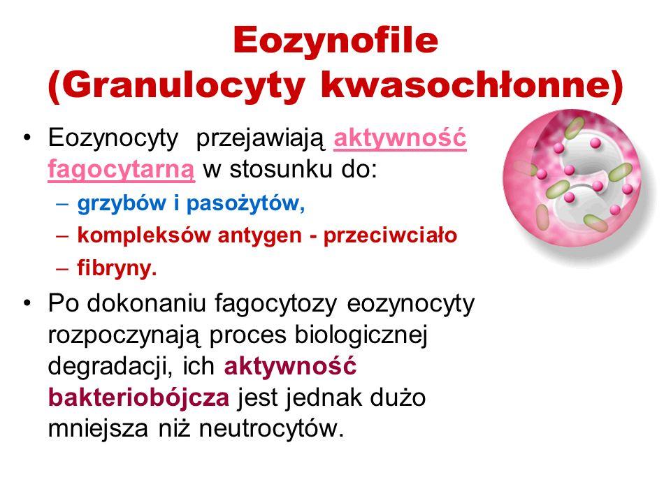 Eozynofile (Granulocyty kwasochłonne)