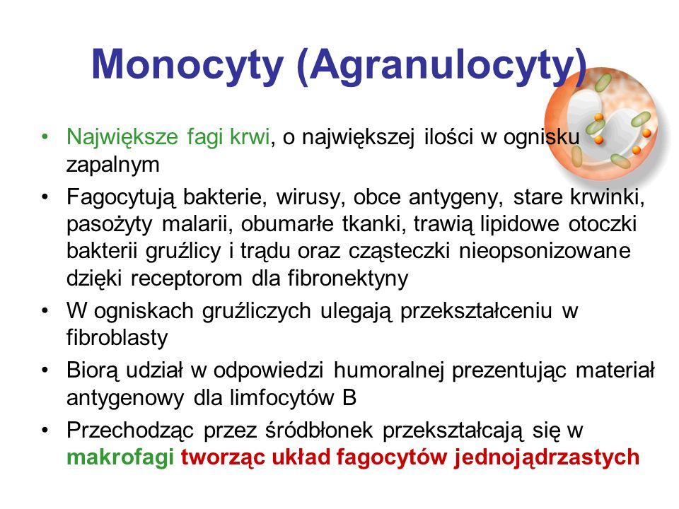 Monocyty (Agranulocyty)