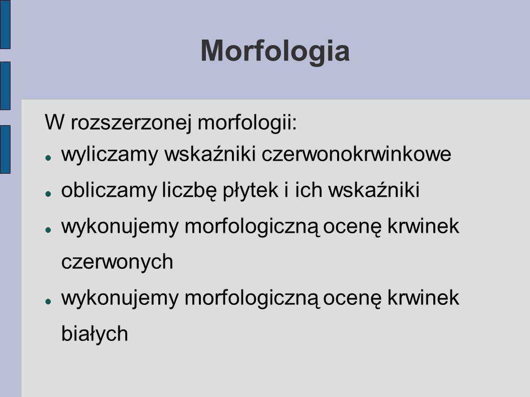 Morfologia W rozszerzonej morfologii: