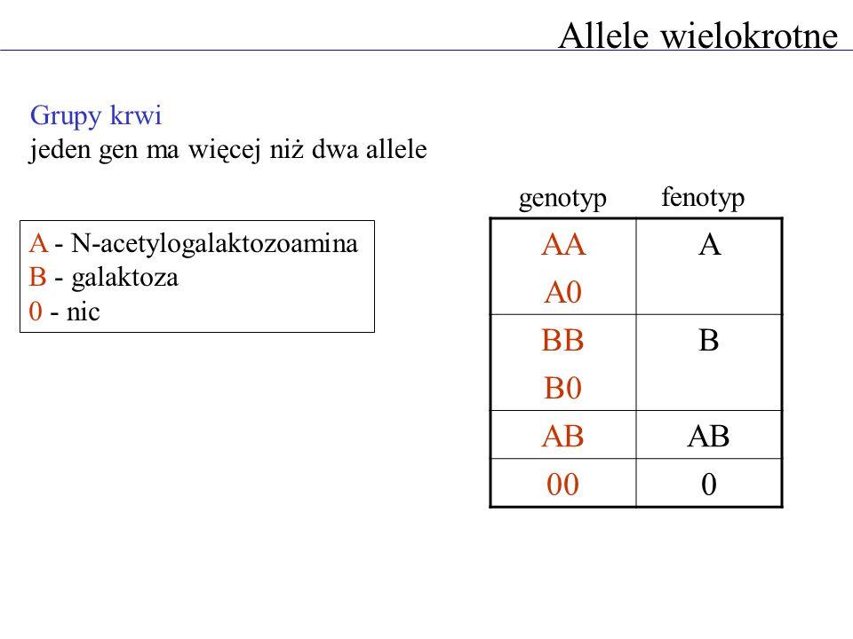 Allele wielokrotne AA A0 A BB B0 B AB 00 Grupy krwi