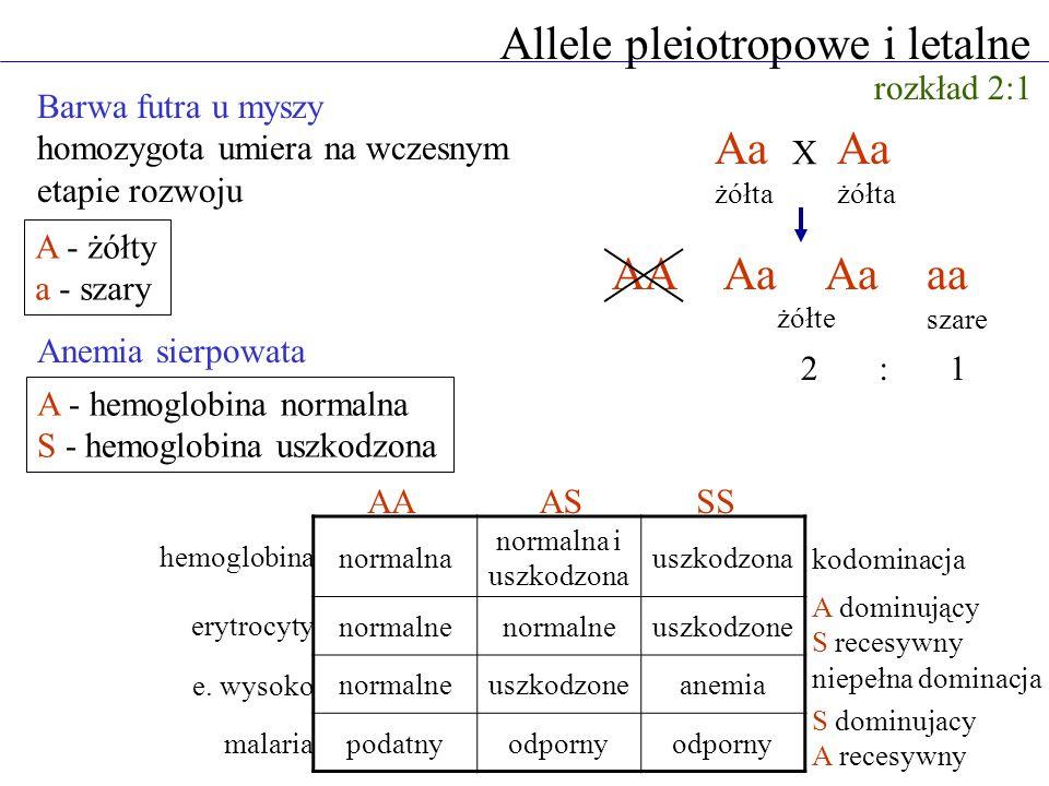 Allele pleiotropowe i letalne