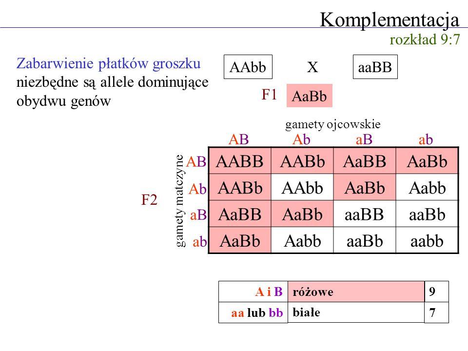 Komplementacja AABB AABb AaBB AaBb AAbb Aabb aaBB aaBb aabb
