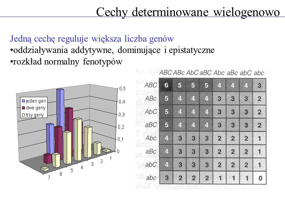 Cechy determinowane wielogenowo