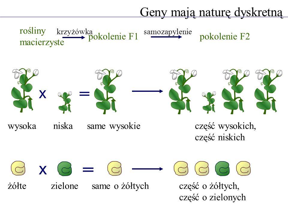 Geny mają naturę dyskretną
