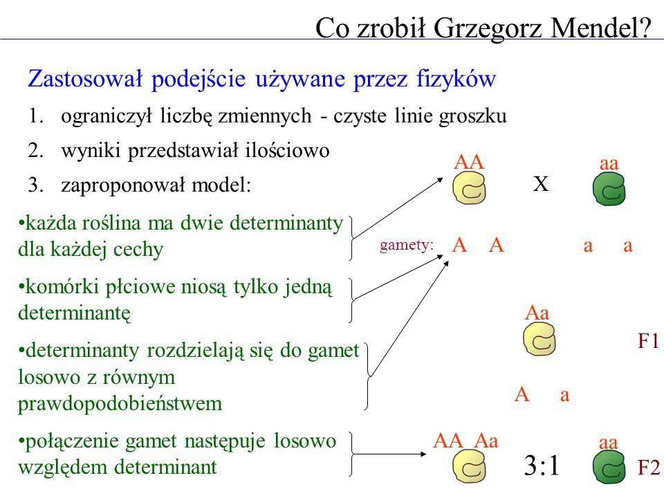Co zrobił Grzegorz Mendel
