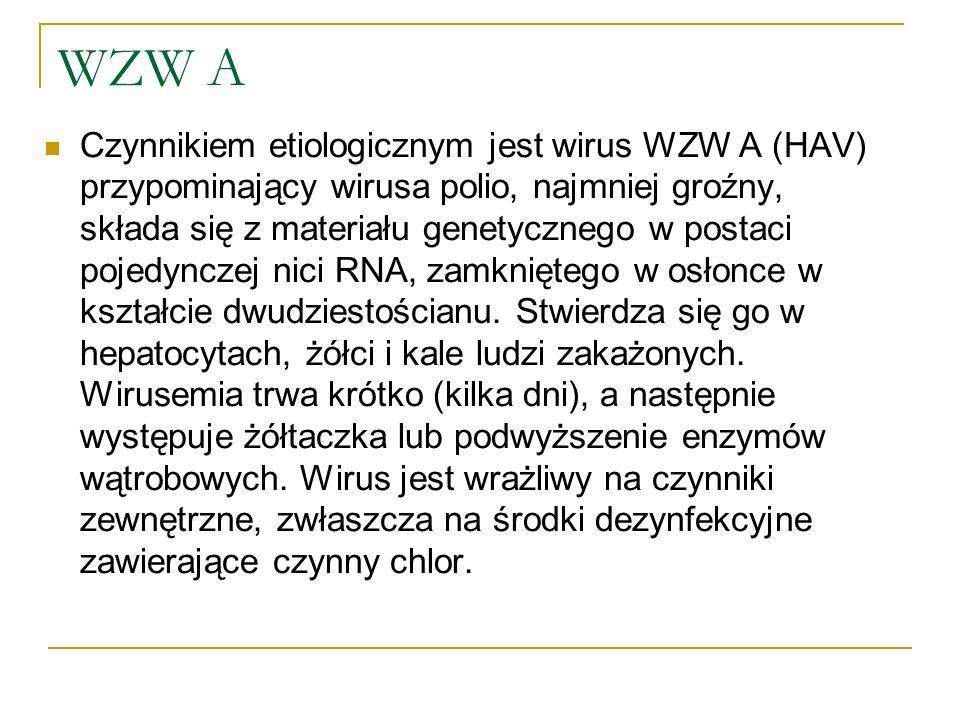 WZW A