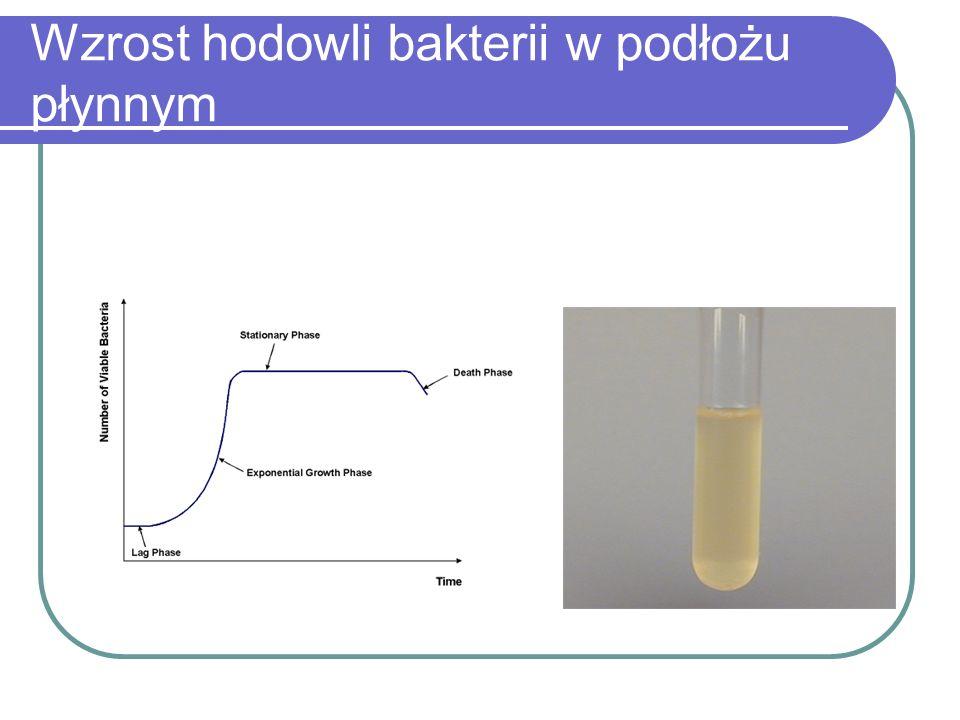 Wzrost hodowli bakterii w podłożu płynnym