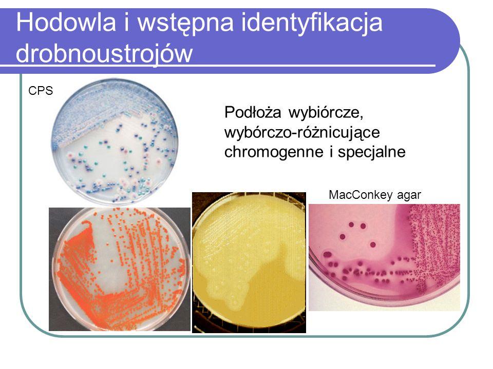 Hodowla i wstępna identyfikacja drobnoustrojów