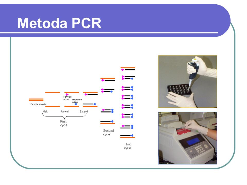 Metoda PCR