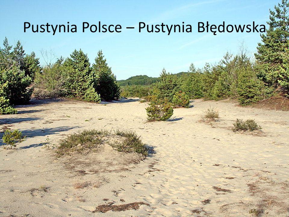 Pustynia Polsce – Pustynia Błędowska