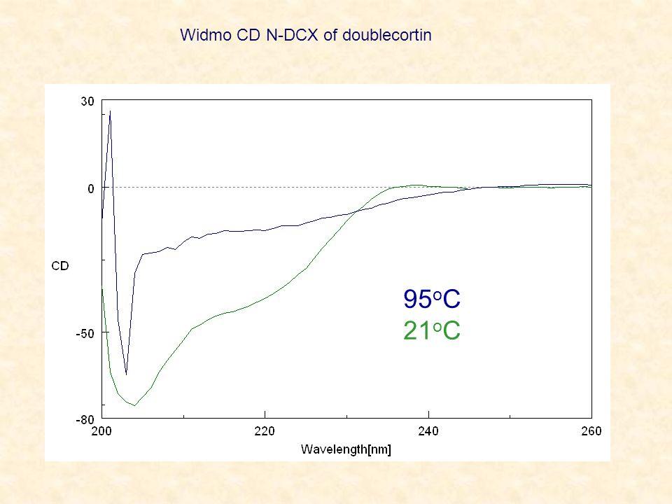 Widmo CD N-DCX of doublecortin
