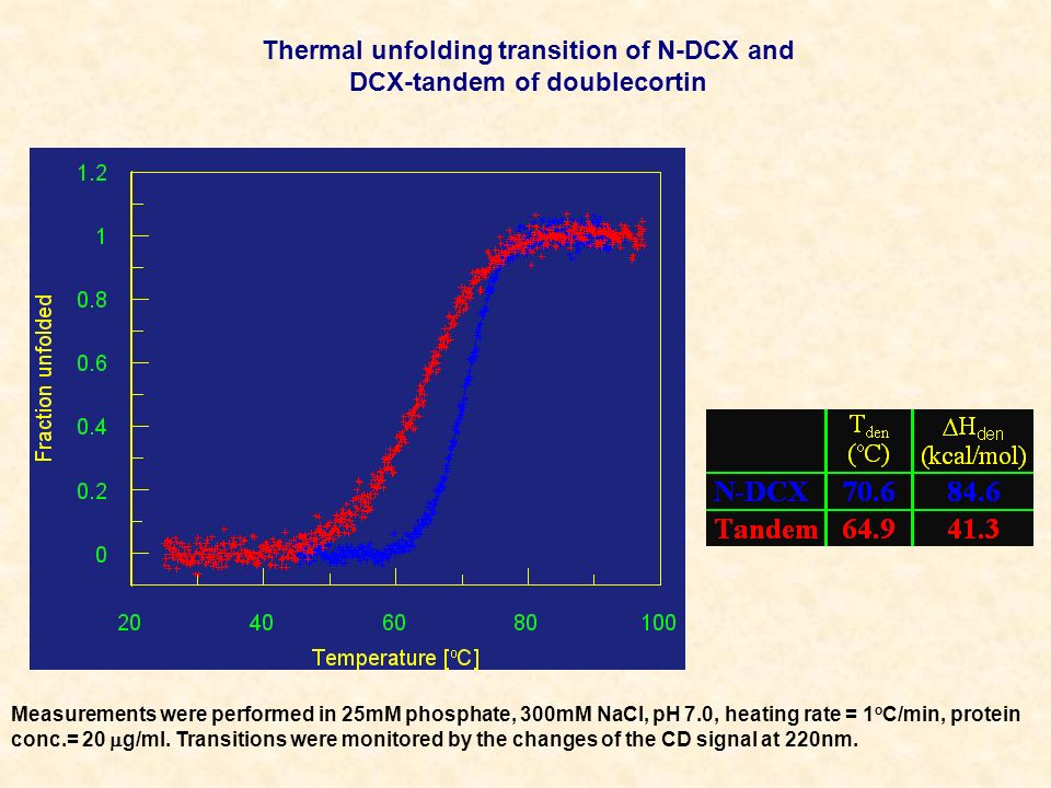 Thermal unfolding transition of N-DCX and DCX-tandem of doublecortin
