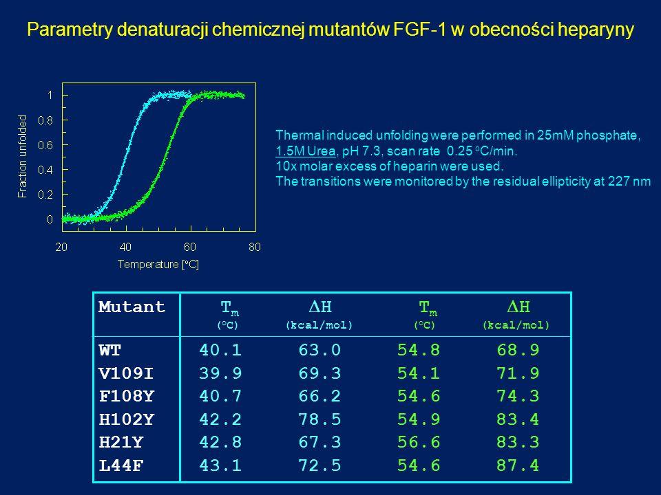 Parametry denaturacji chemicznej mutantów FGF-1 w obecności heparyny