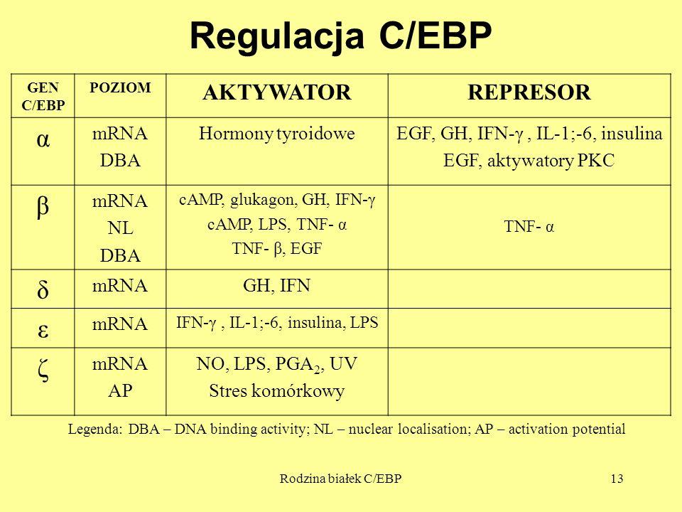 Regulacja C/EBP α β δ ε ζ AKTYWATOR REPRESOR mRNA DBA