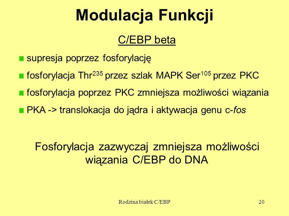 Fosforylacja zazwyczaj zmniejsza możliwości wiązania C/EBP do DNA