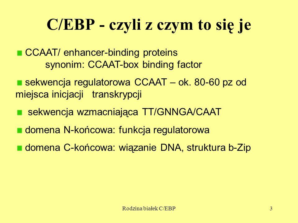 C/EBP - czyli z czym to się je