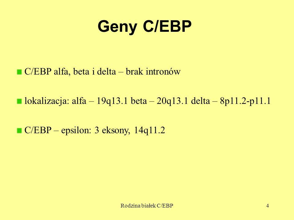 Geny C/EBP C/EBP alfa, beta i delta – brak intronów