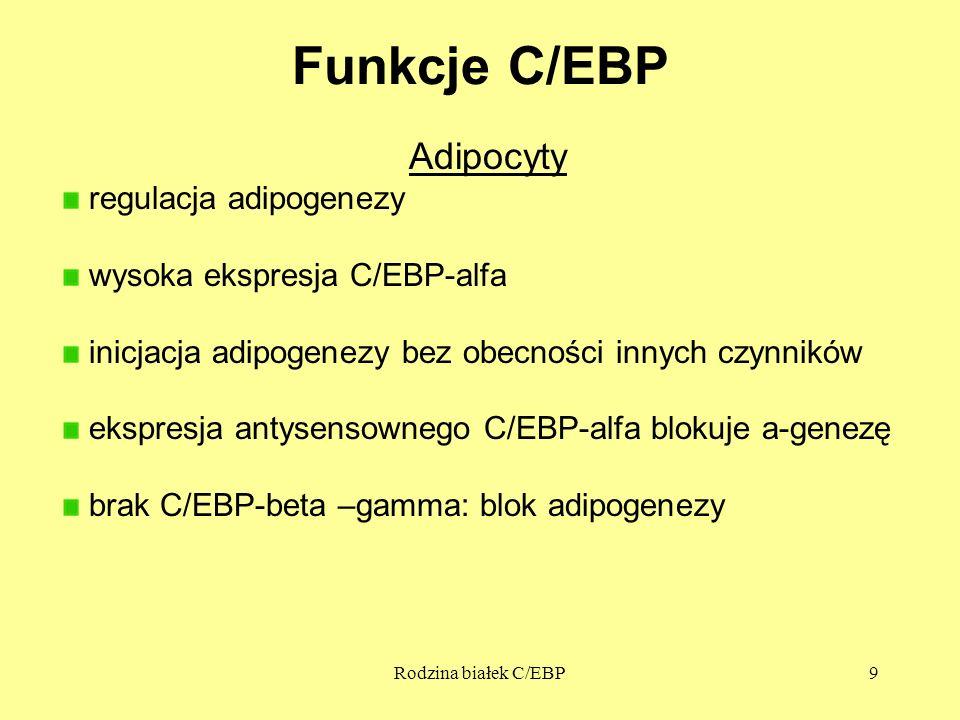 Funkcje C/EBP Adipocyty regulacja adipogenezy
