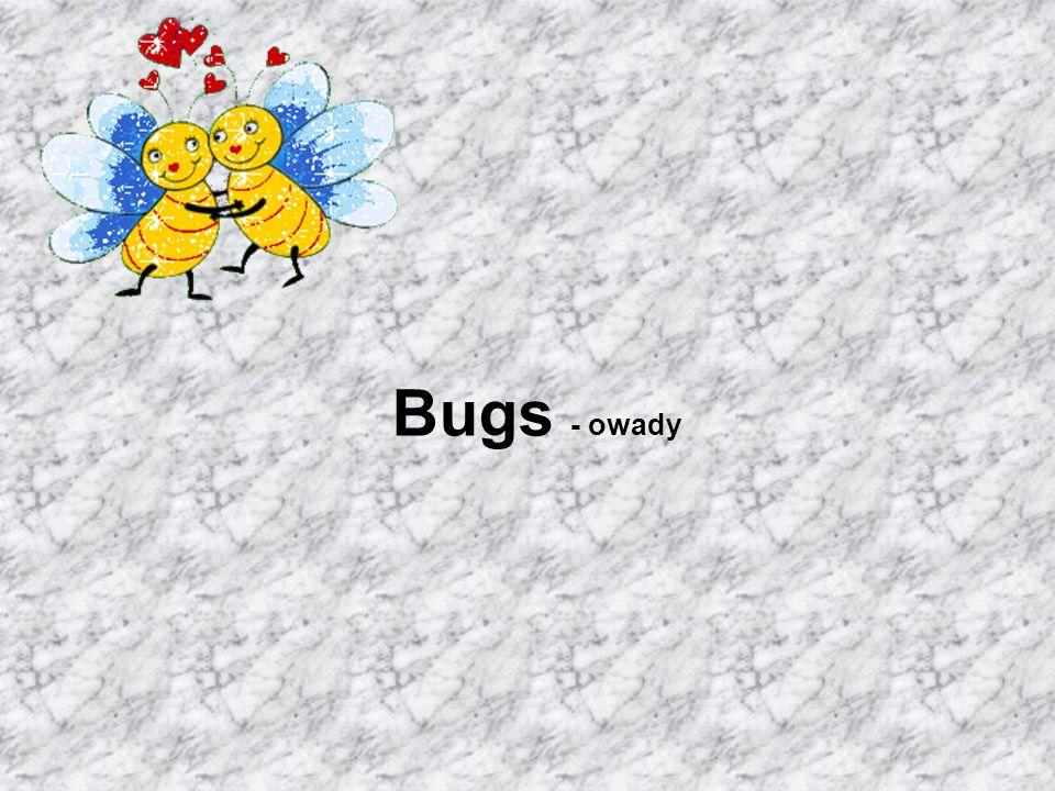 Bugs - owady