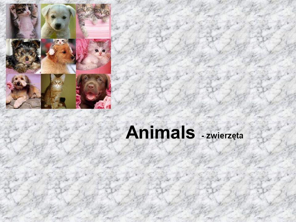 Animals - zwierzęta