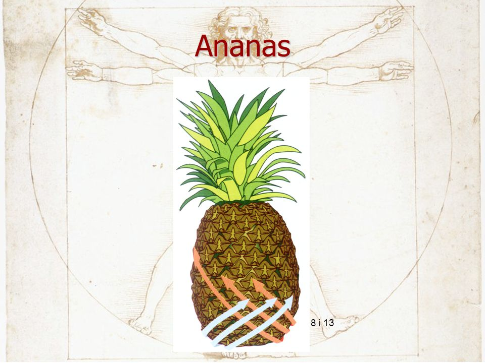 Ananas 8 i 13