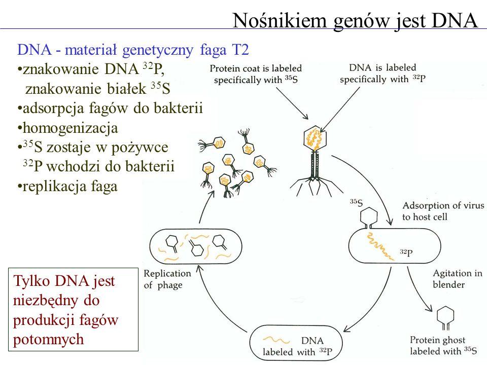 Nośnikiem genów jest DNA