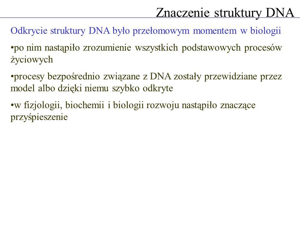 Znaczenie struktury DNA