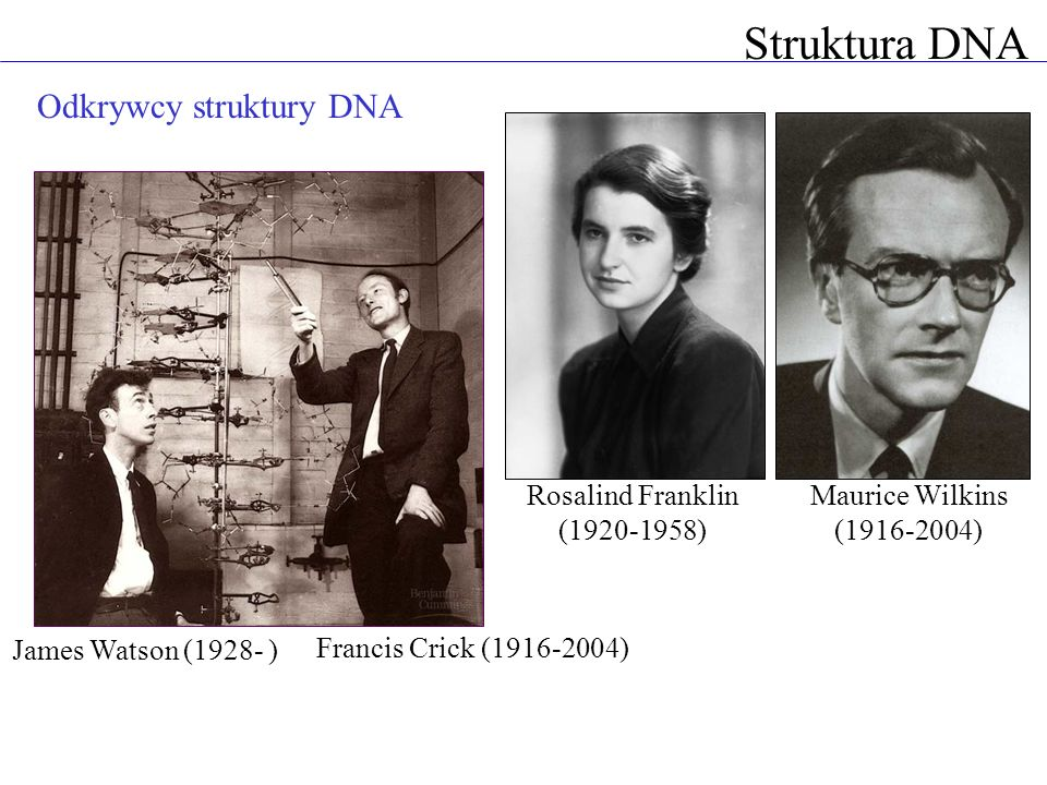 Struktura DNA Odkrywcy struktury DNA Rosalind Franklin (1920-1958)