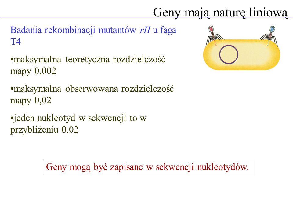 Geny mają naturę liniową