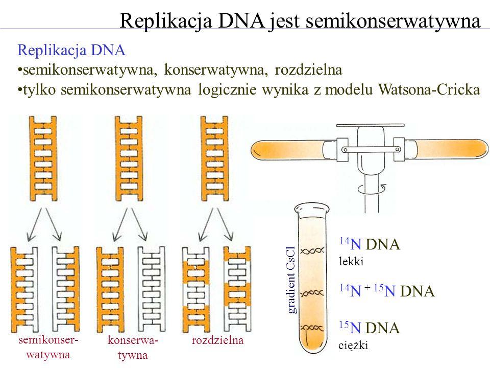 Replikacja DNA jest semikonserwatywna