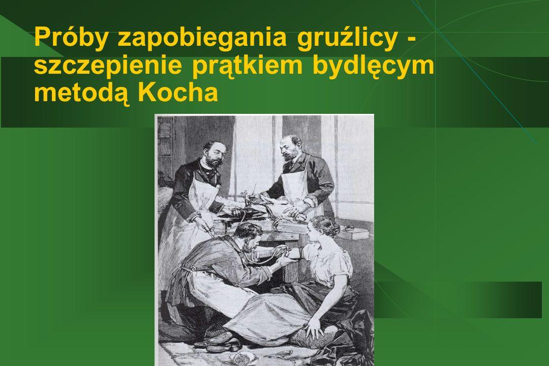 Próby zapobiegania gruźlicy - szczepienie prątkiem bydlęcym metodą Kocha