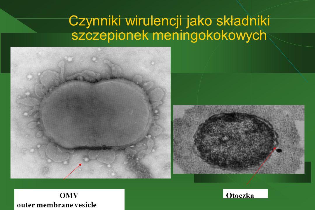Czynniki wirulencji jako składniki szczepionek meningokokowych