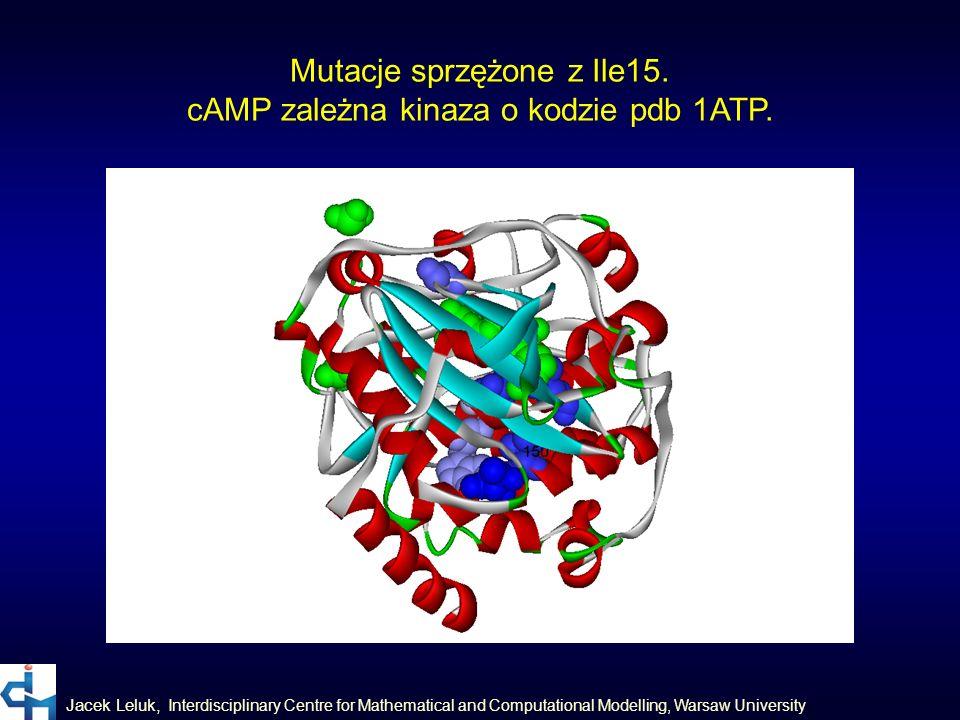 Mutacje sprzężone z Ile15. cAMP zależna kinaza o kodzie pdb 1ATP.